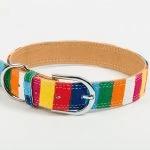 rainbow dog collar by iwoof