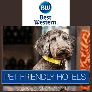 pet friendly hotels best western