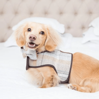 teddy maximus, british made pet accessories